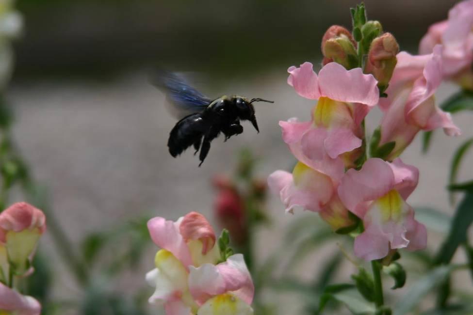Blüte mit Flugobjekt