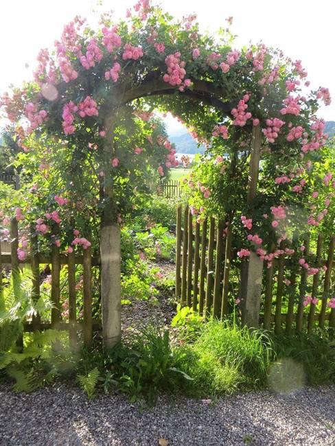 Rosenblüte im Juni