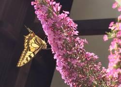 Schmetterling Garten