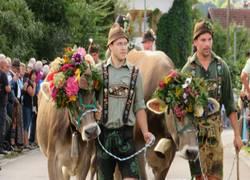 Viehscheid Buching