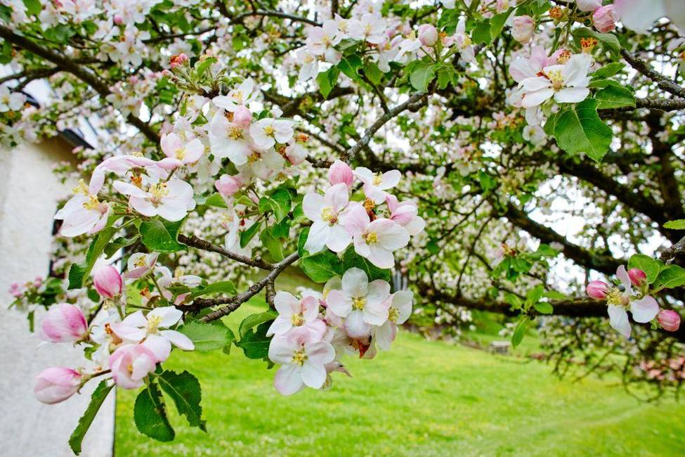 Frühling in Hopfen am See