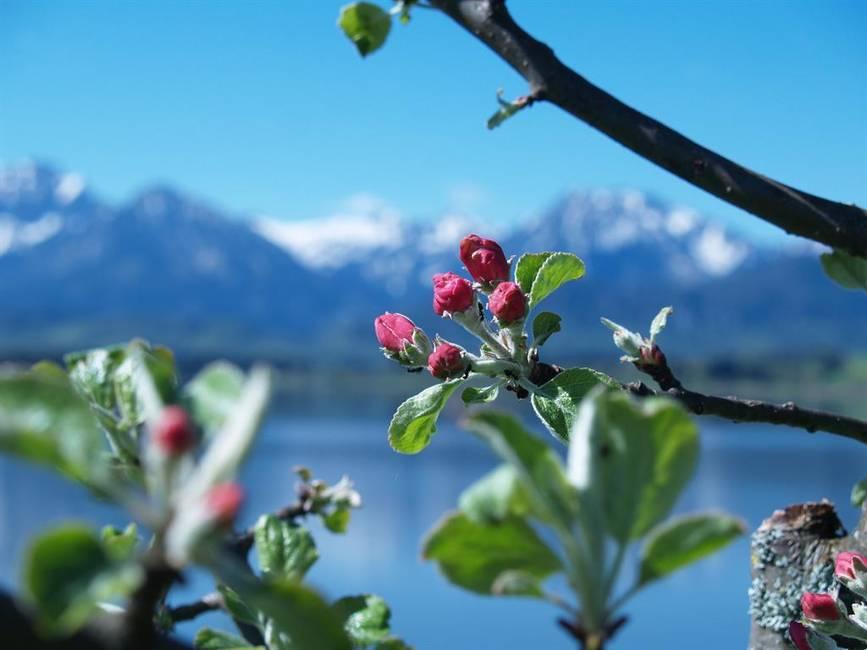 Fruehjahr in Hopfen am See