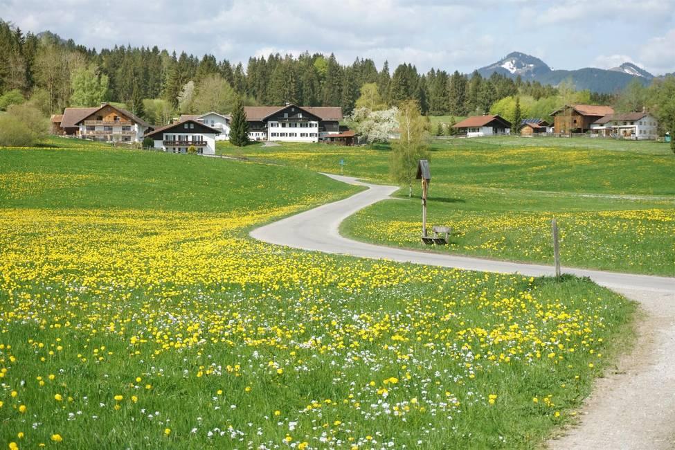 Füssen_Löwenzahn_6(57)_©Füssen Tourismus und Marke