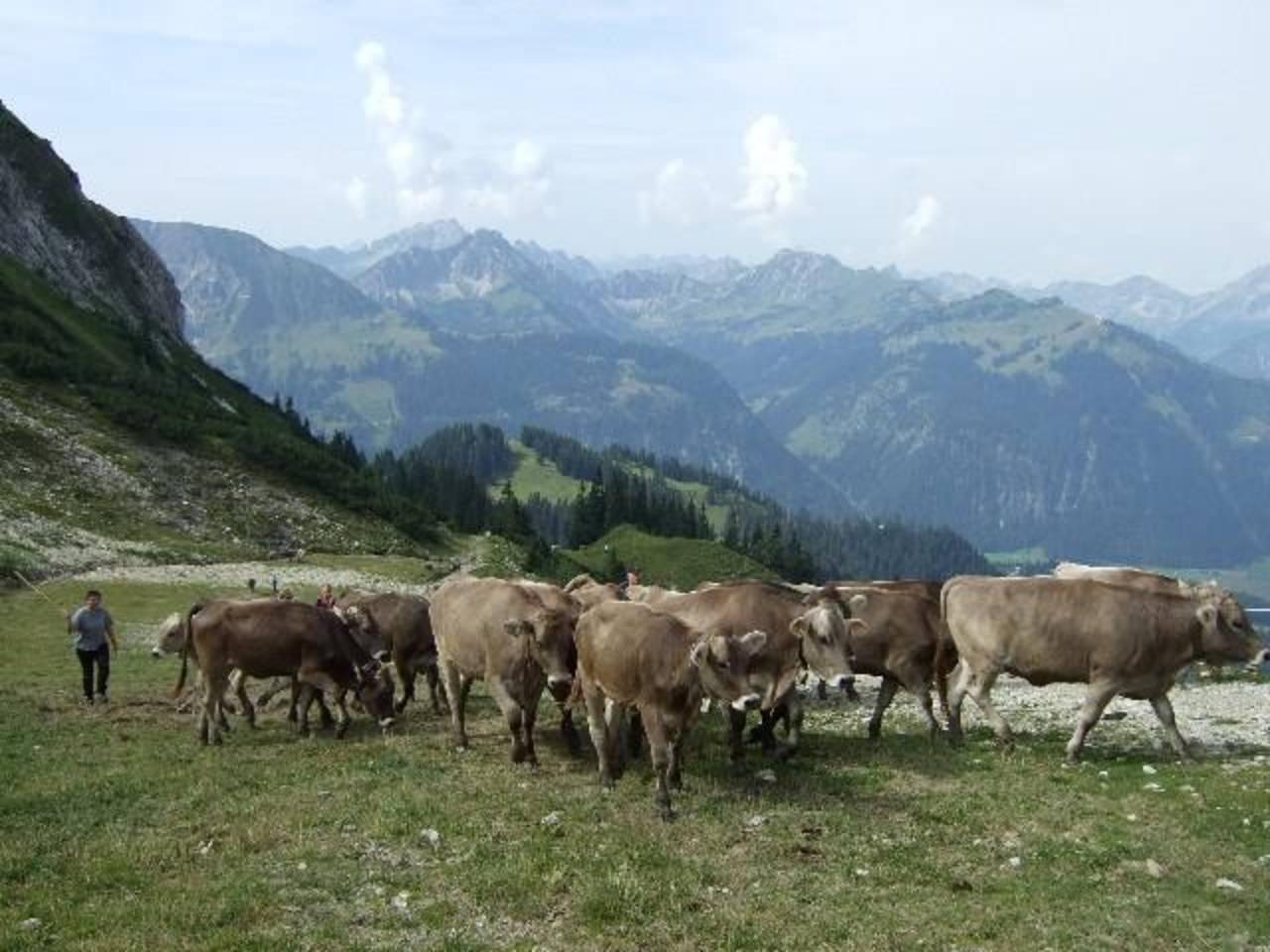 Auf unserer Alpe am Füssener Jöchle