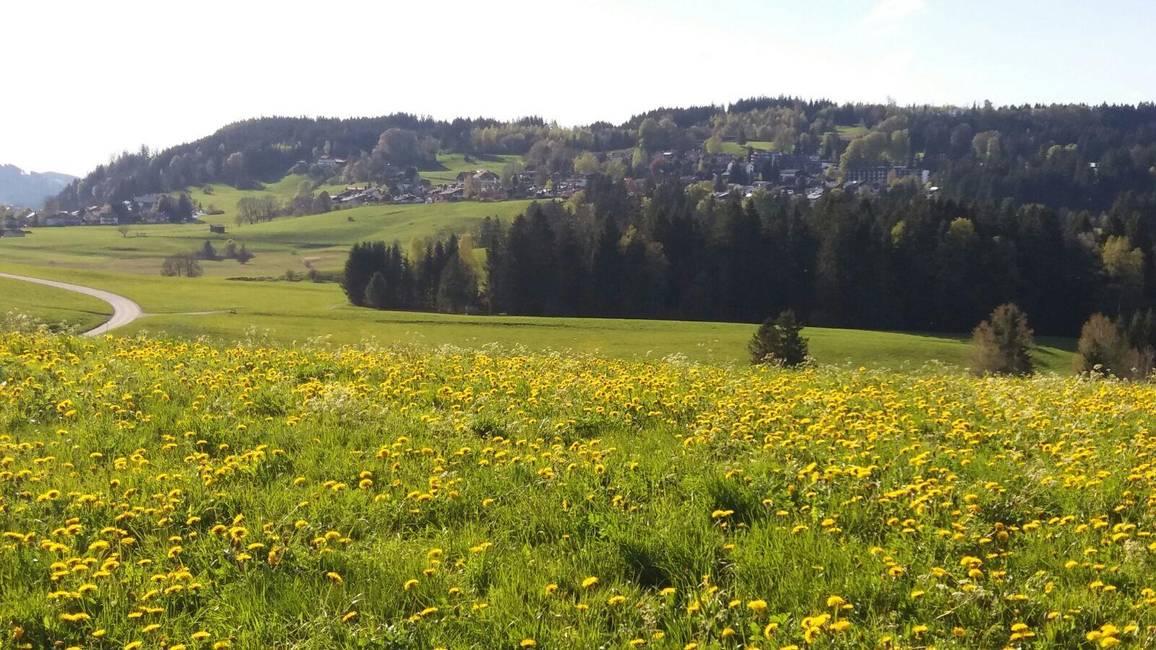Hopfen am See mit Enzensberg