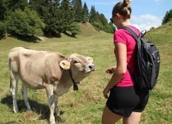 Füssen_Wandern_Kuh_6(2)_©Füssen Tourismus und Mark