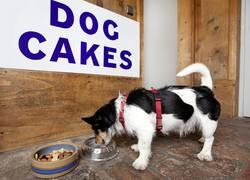 Hunde sind bei uns willkommen!