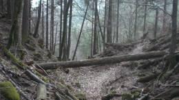Waldschäden nach Sturmereignis