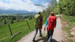 Wanderung in Richtung Alpe Beichelstein mit Blick auf blühende Löwenzahnwiesen.