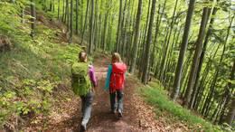 Wandern im Wald rund um Füssen im Allgäu.