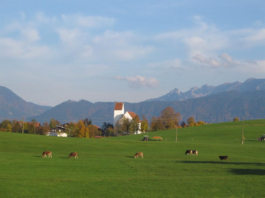St.Urban und Kühe
